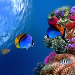 Snorkelling and diving in the Red Sea