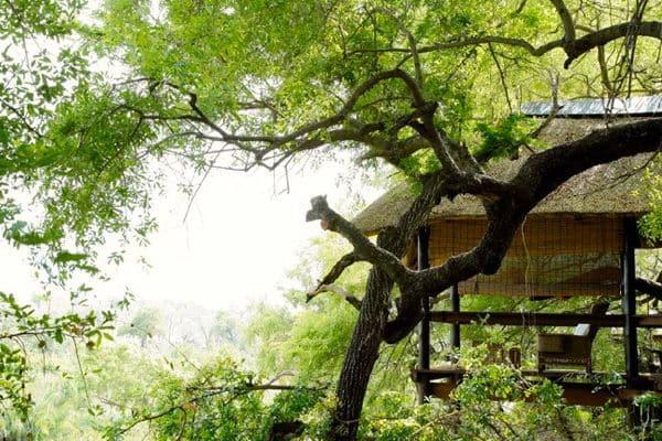 Londolozi, Tree Camp