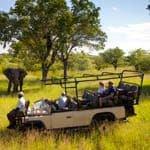 Safari Honeymoon at Ulusaba