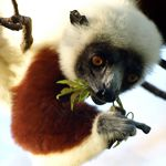 Madagascar honeymoons