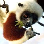Madagascar honeymoons